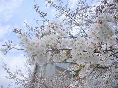 2009年京都花の宴Dj-net近畿グループの画像